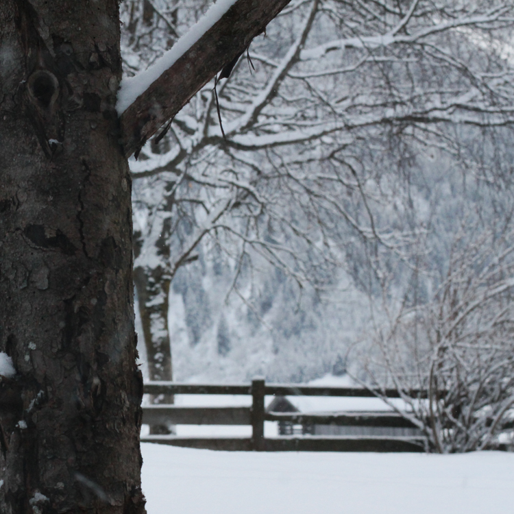 blog sneeuw 1