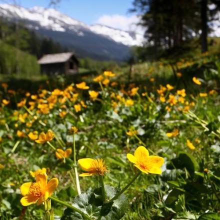 berghutje Onze Why achtergrond inspiratie bergbeleving ontmoeten bergen vakantieadresje in hotel pension de Berghut Rauris Oostenrijk