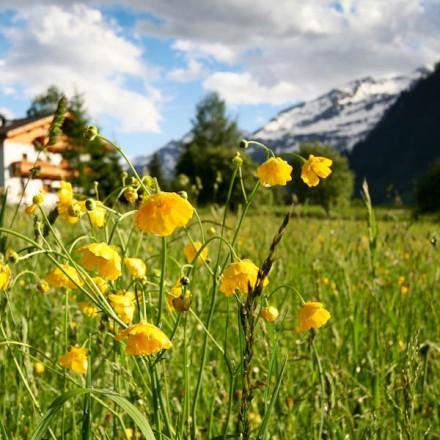 huis zomer Onze Why achtergrond inspiratie bergbeleving ontmoeten bergen vakantieadresje in hotel pension de Berghut Rauris Oostenrijk
