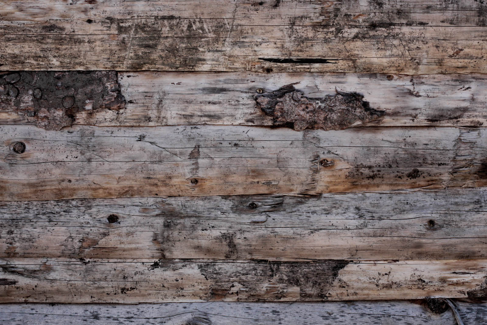 foto met hout