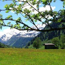 Lente bij de Berghut