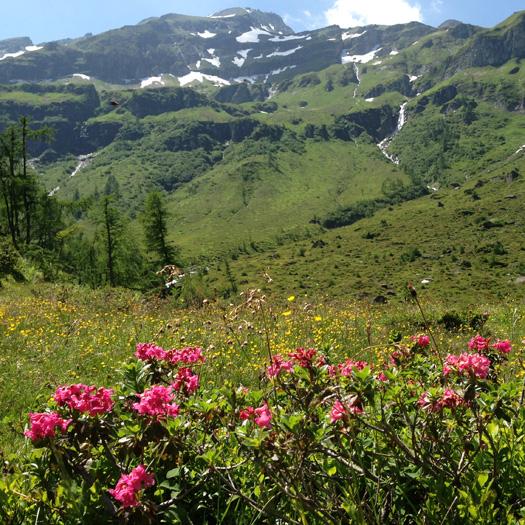 bergwandeling maken naar de Feldereralm bij de Berghut Rauris Oostenrijk