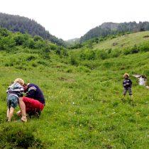 Klein geluk: Alpenweidestruinen