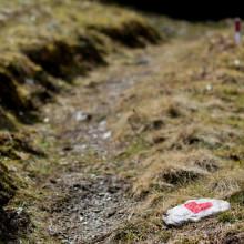 Passiewijzer.nl hart volgen het roer om loopbaancoach