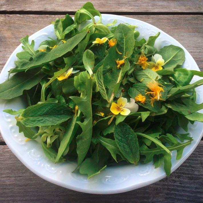 salade met paardenbloem de Berghut.com