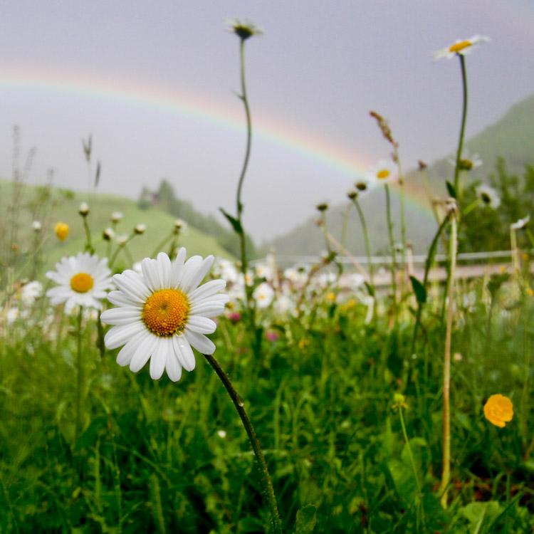 krachtweek kracht en kwetsbaarheid in de Berghut.com