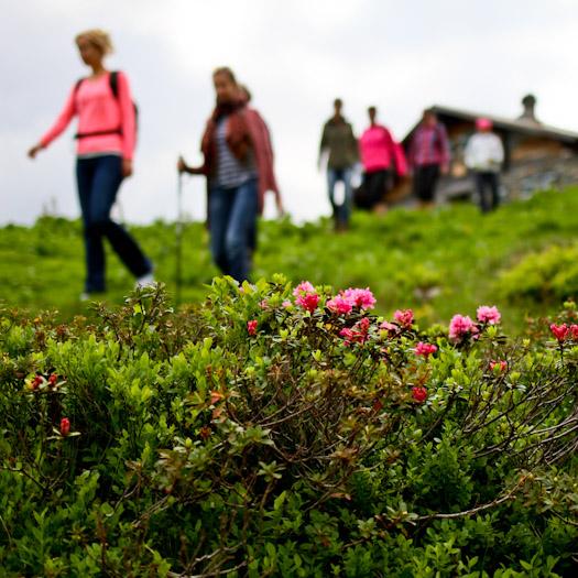 zomer in de Berghut.com actieve vakantie met kinderen in Oostenrijk kleinschalige accomodatie (6 van 44)