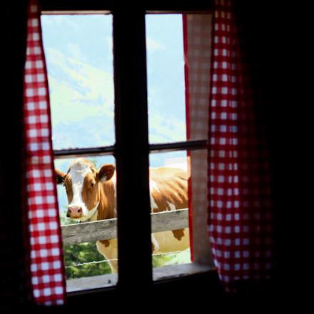 berghutje.com vakantie in de bergen in een almhut