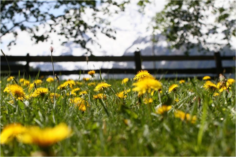 voorjaar bij de Berghut.com  in Oostenrijk