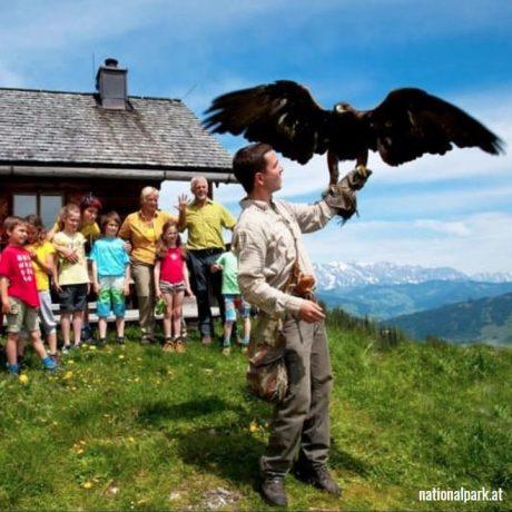 de Berghut appartementen zomervakantie kindvriendelijk vakantiewoningen Rauris Oostenrijk Salzburgerland Roofvogelshow